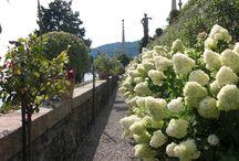 Discover lake Maggiore with Micaela Lucini. Guided tours / The beauty of lake Maggiore with the famous Borromean islands and Stresa and enchanting lake Orta