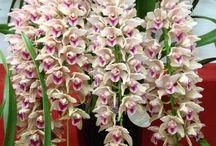 Naturalesa  orquidias