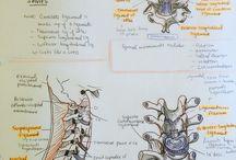 RN- anatomy & physiology