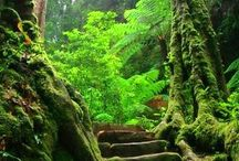 Forest / Enchanted trail