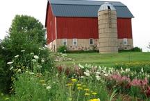 Dream Farm