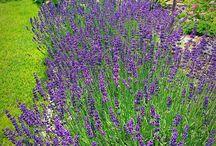 nasa_zahradka/our_cottage_garden