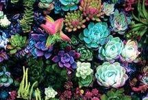 Succulents I want that I don't have