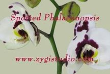 Orchid Time-lapse / Time-lapse video clips of growing, opening, rotating and dying Orchid flowers