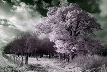 Trees..... / by Jennifer Mousseau