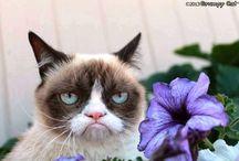 Gatti scontrosi