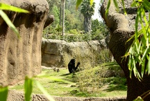 Zoological Parks