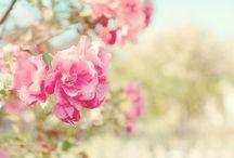true beauty!!