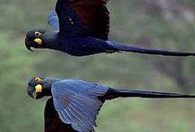 Aves e animais