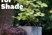 Container garden in the shade