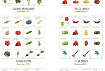 vege fruit garden