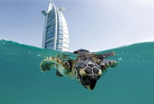 Aquatic Life / by Melissa Cox