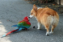 Parrot Love / by Mariana Chrisney