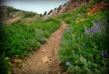 The Miles of Trails! / by Visit Ogden Valley