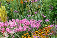 Jewel colours / A rich palette of vibrant plants for a partly sunny, part shaded garden