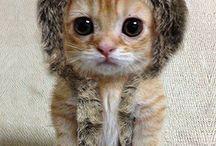 **Cute little fluffy things**