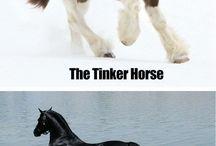 HorsesEquitation