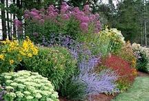 Gardening & Outdoor Living / by Kristi Bennett