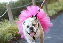 pets dressed up