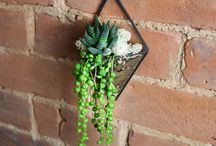 Hanging Planters and Terrariums