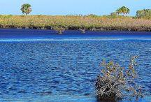 Merrit Island National Refuge