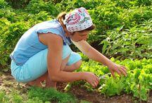 Vegetable Garden / Giardino commestibile