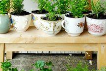 cups/plants
