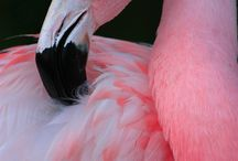 Flamingo Road / Fla....Ming....os!!!    Love love!!  Beautiful creatures, but, I don't want them in my yard!!! HaHa!! / by Marcy Parker