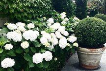 Giardino / ogród i okolice