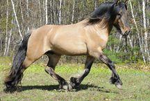 Dun and buckskin horses