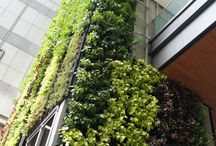 "Hereen Singapore, Greenwalls by Greenology / 30m high Greenology (GVG) Greenwalls cladding around the building in the middle of Orchard Road creating a living breathing ""Green Skin""."