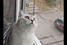 funny cat @
