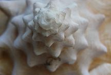 INSPIRED : Nature / Forms and shapes captured from nature that inspires texture, pattern and color!