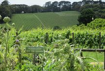 Wine & Food Lovers' Tours / This board gives viewers an overview of why our tours are worth it!