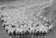 Sheep for Gwendolyn / by Jan Bogle