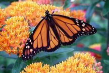 Gardening with native plants / Gardening with native plants to attract the bees, butterflies, and birds