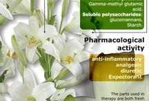 Medicinal Plants & Remedies / by Vivian C. Aranda