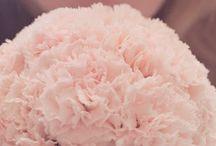gillyflower. wedding. / #gillyflowers #weddingflowers #flowers #weddingdecor #pinkflowers #pink #flower #florist