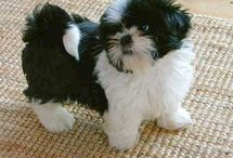 The puppie / Each cute pup / by Sheila Avery
