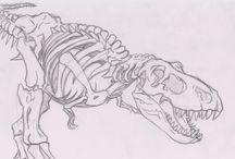 Vertebrate skeleton