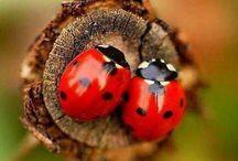 """Lady bug..lady bug..fly away home """