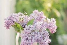 Lilac time / My favourite season, which is coming soon