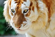 WildWorld / I will go to the discovery of wonderful animals in the world.
