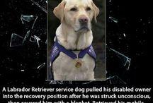 Amazing Dog Heroes