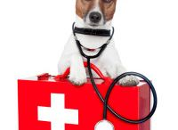 Pet Health / Dogs are our best friends. Keep them healthy and happy with tips, tricks, and advice found on this board.