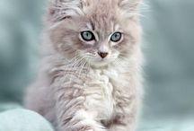 _cats_
