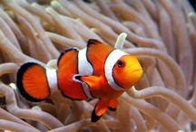All God's Critters - Life Underwater / by Kay Hough