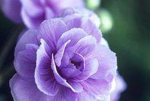 Flowers & flowering