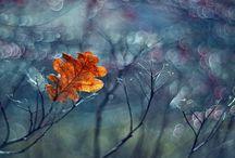 Impressionism Photo Inspiration