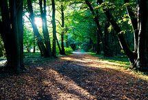 Forest Fantasies / by Maelynne